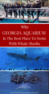 One word to describe the swimming with whale sharks as part of the Georgia Aquarium's Journey with the Gentle Giants –Incredible!Whether you're an avid diver or a never-even-gone-snorkeling aquarium enthusiast, this experience is something you'll remember for a long, long time. here's why Georgia Aquarium is THE best place to make this happen.