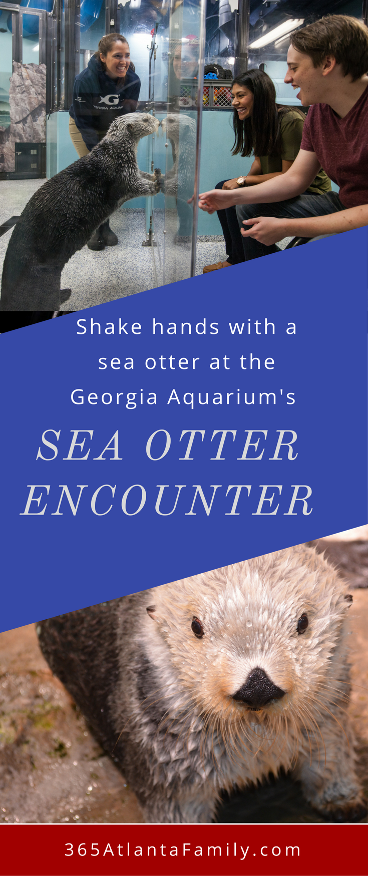 Georgia Aquarium's Sea Otter Encounter - shake hands with an otter