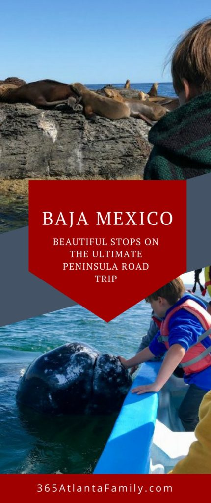 From unbelievable beaches to hot springs and whale watching (and petting) you simply MUST make time for Baja Mexico. The best way to travel the peninsula is on a family road trip. Here are the top places to visit on your adventure.